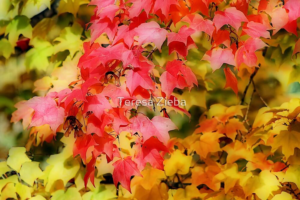 Autumn Colours V by Teresa Zieba
