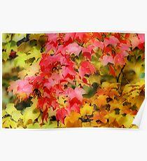 Autumn Colours V Poster