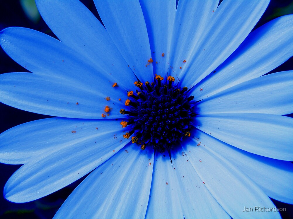 Blue Daisy Blue by Jan Richardson