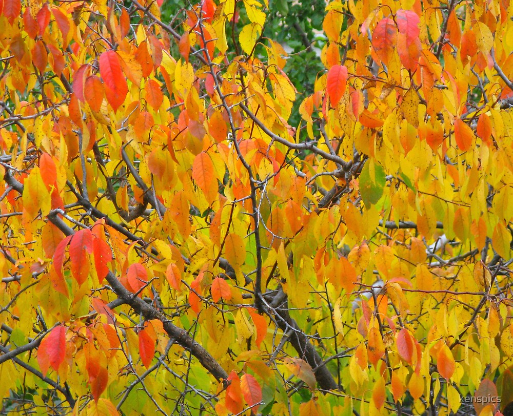 Autumn Splendor by kenspics