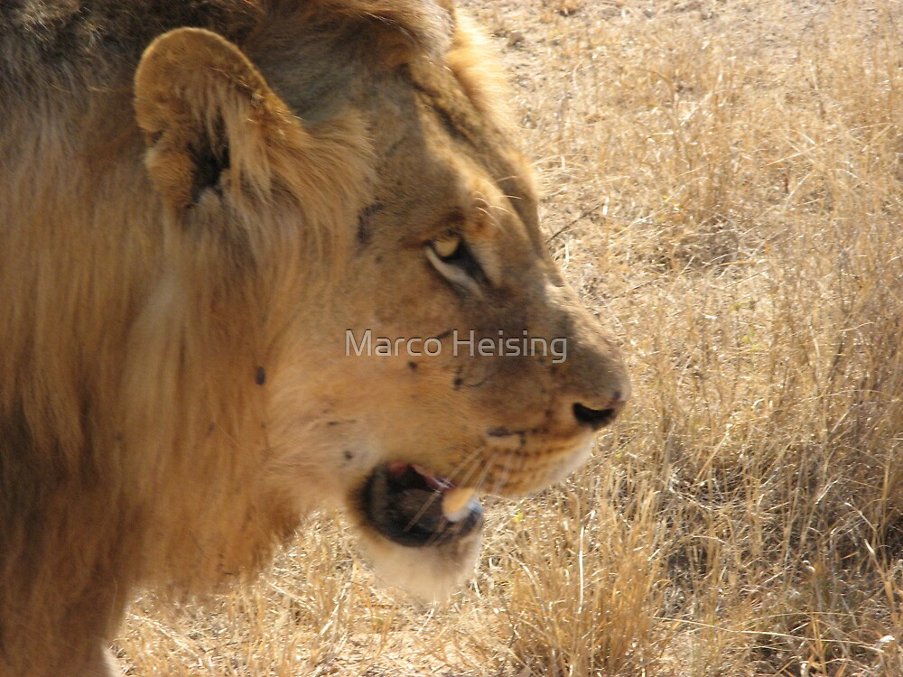 The African King by Marco Heising