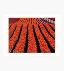 Ribbons of colour... Art Print
