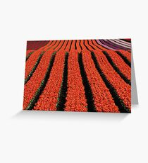 Ribbons of colour... Greeting Card