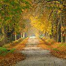 Todas in November by zolim