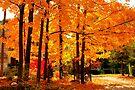 A Front Lawn in Fall.... by Larry Llewellyn