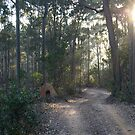 Early morning light. Mimosa Rocks National Park, New South Wales, Australia. by Mette  Spange