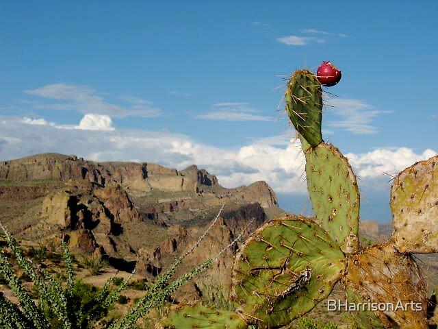 Prickly Pear by BHarrisonArts