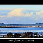 Ards from Castle Espie by gundogpic