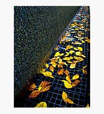 Autumn Grate Photographic Print