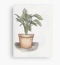 Plant Canvas Print