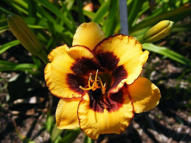 Yellow Flower by Tamara Bobst