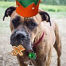A Merry Boxer Christmas by Randy Turnbow