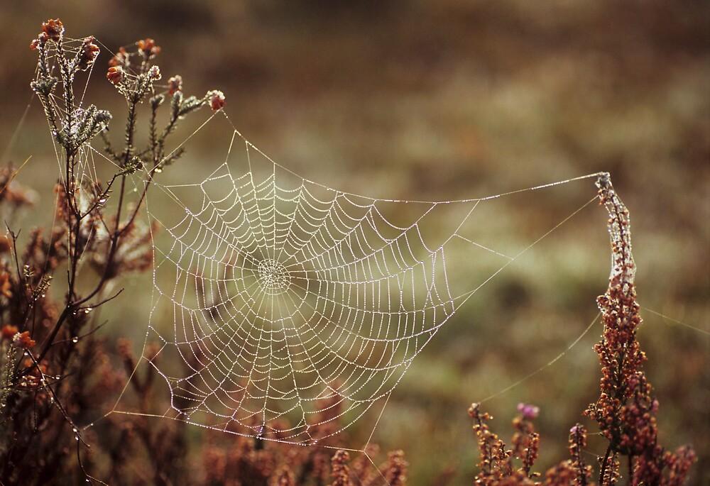 Morning Dew by Kasia Nowak