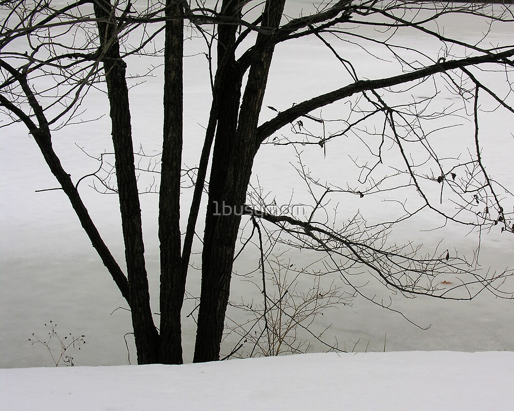 tree in winter by 1busymom