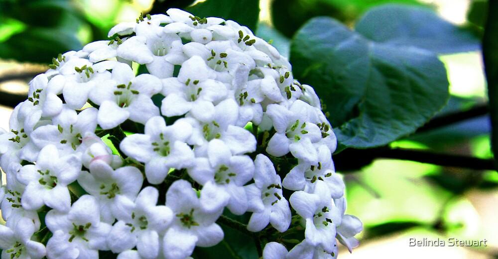 Flowers In Bloom by Belinda Stewart