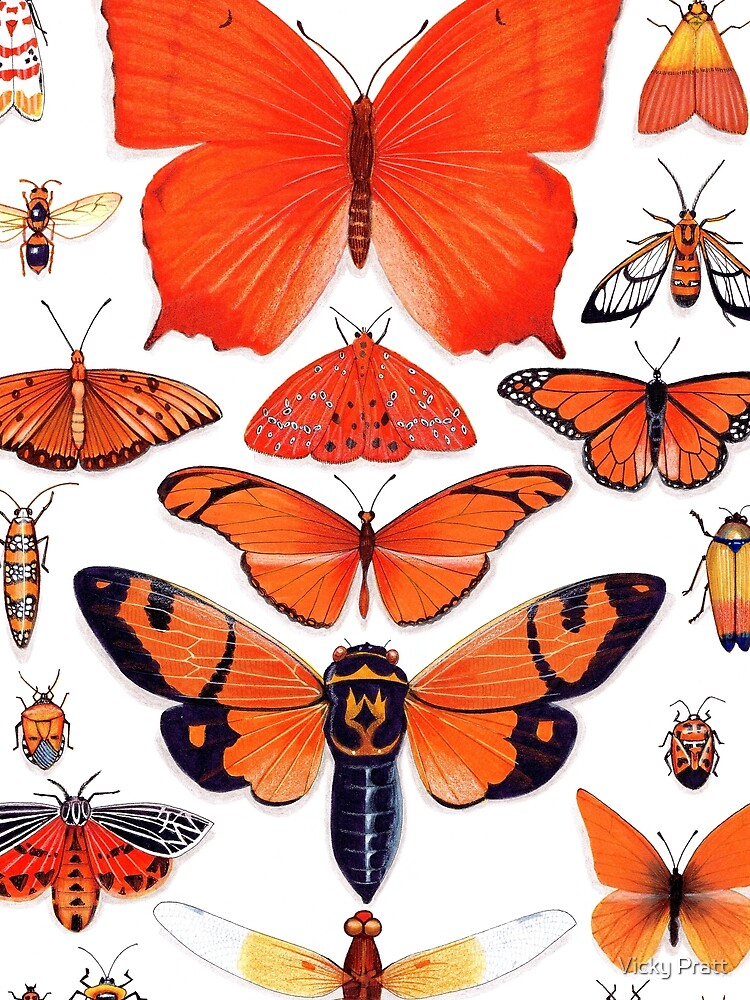 Orange Insect Collection by TurtleVelocity