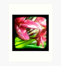 Frangipani Delight TtV Art Print