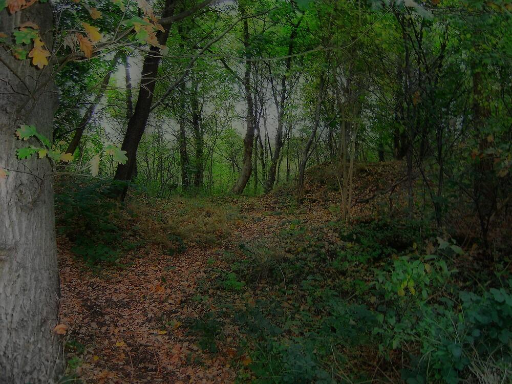 Dark forest. by alaskaman53