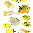 Butterflyfish of the tropical Pacific by Andrea England