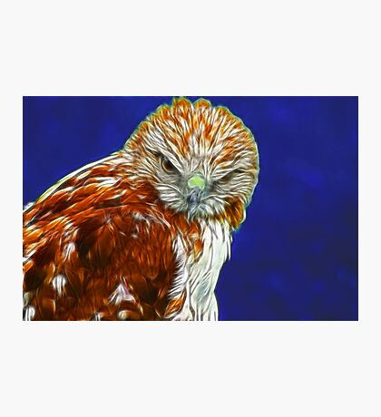 Falcon #1 Photographic Print
