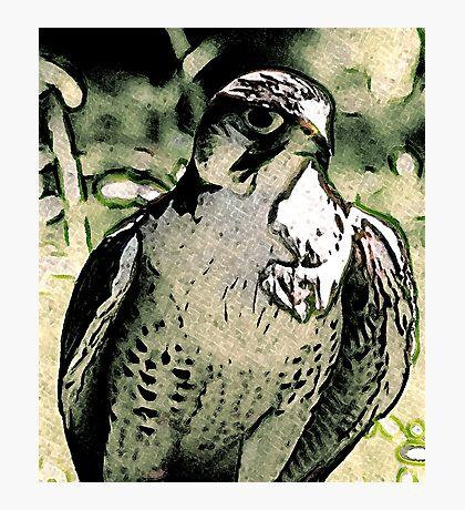 Falcon #2 Photographic Print