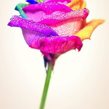 Rainbow Rose by redstar5