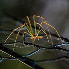 Leggy spider II by AnnaKT