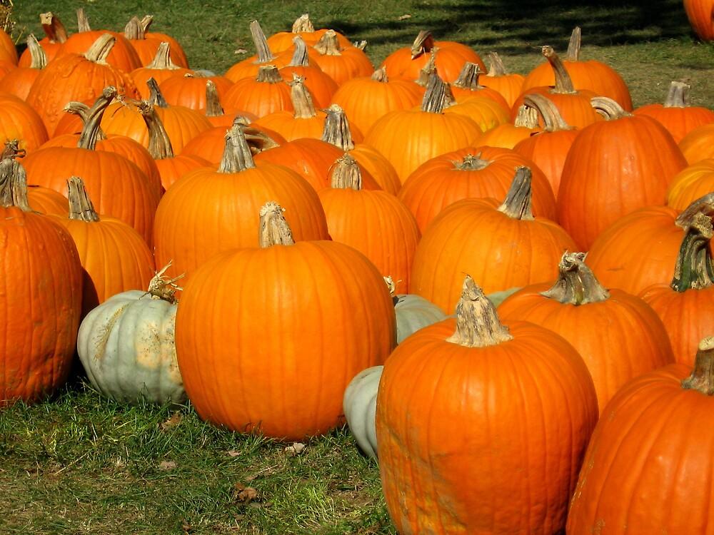 Pumpkins by jojo1