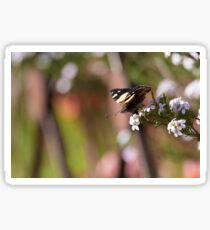 Yellow Admiral Sticker