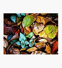 Autumn Blanket Photographic Print
