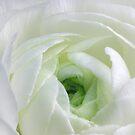 White White White Green by SmoothBreeze7