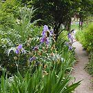 Heide kitchen garden by jayview