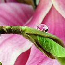 Water Drop For Magnolia by SmoothBreeze7