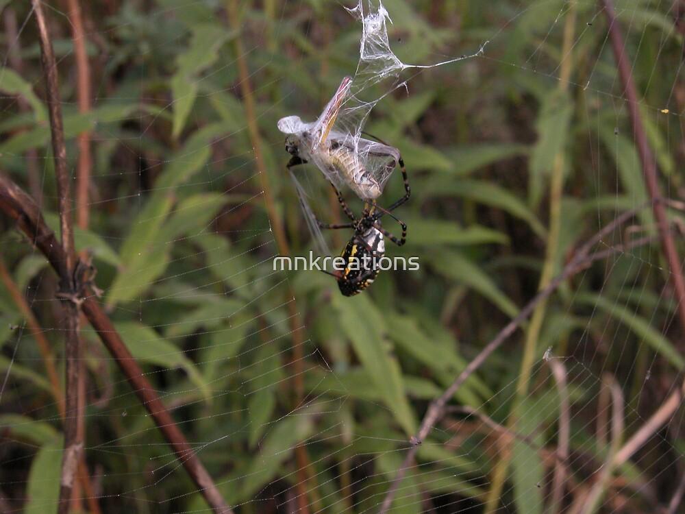 Argiope Trifasciata White Backed Garden Spider  and Grasshopper 2 by mnkreations