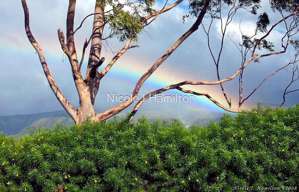 Rainbow in the Trees by Nicole I Hamilton