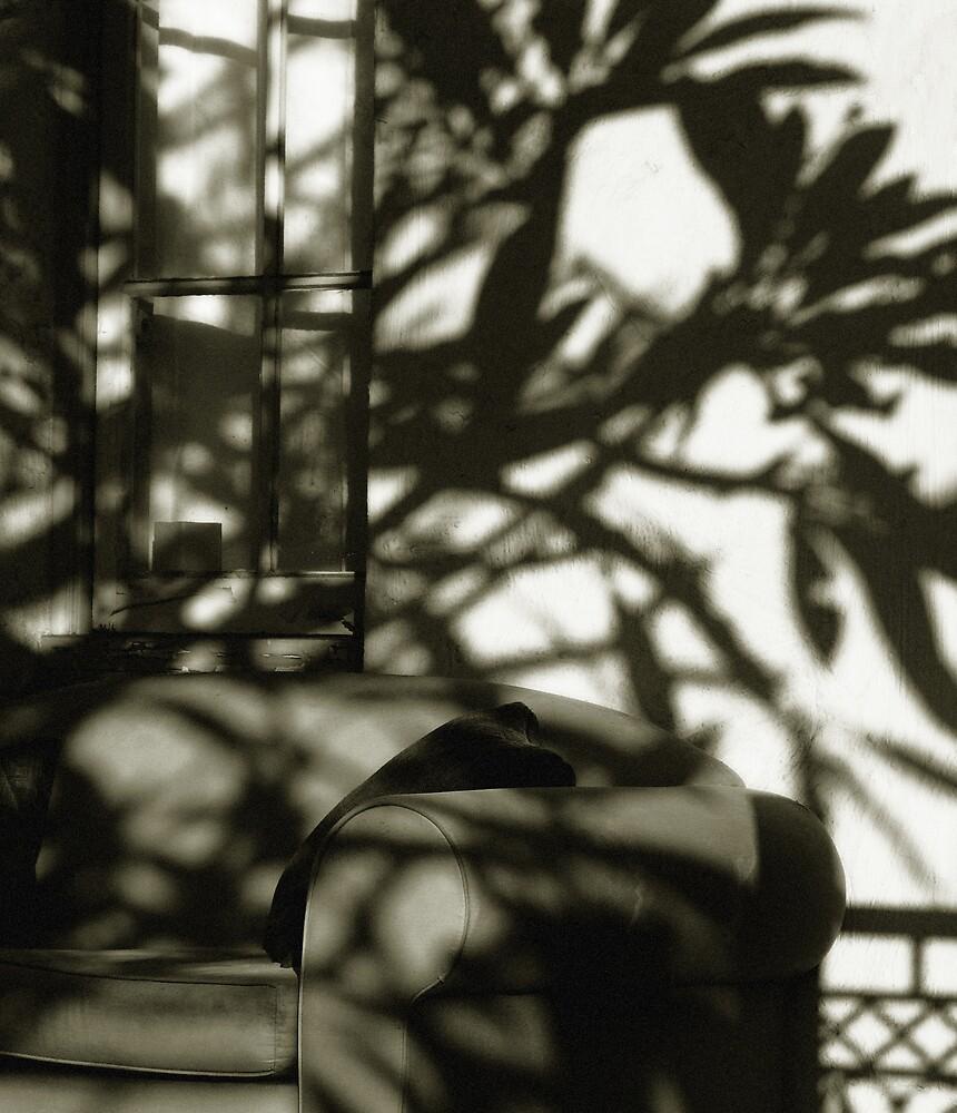 Sofa in Shade by ragman