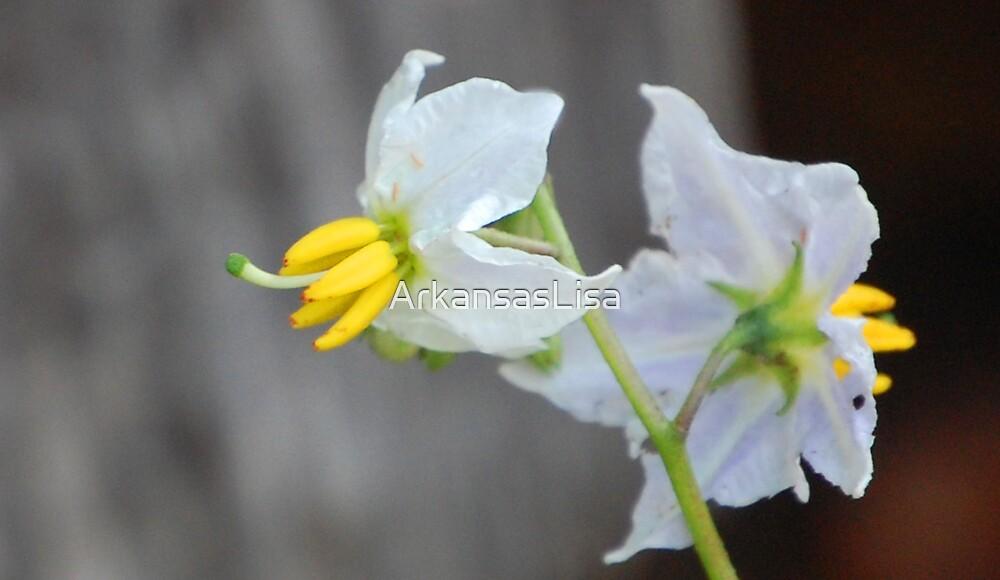 Barn Flower by ArkansasLisa