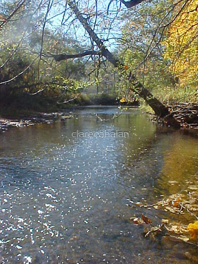 Creek Sunsprinkle and Foliage  by clarecahalan