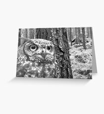 owl1 Greeting Card