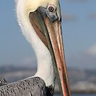 Pelican, Up Close and Personal  by Heather Friedman