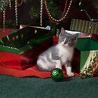Kitty Christmas I by HiddenRockRanch