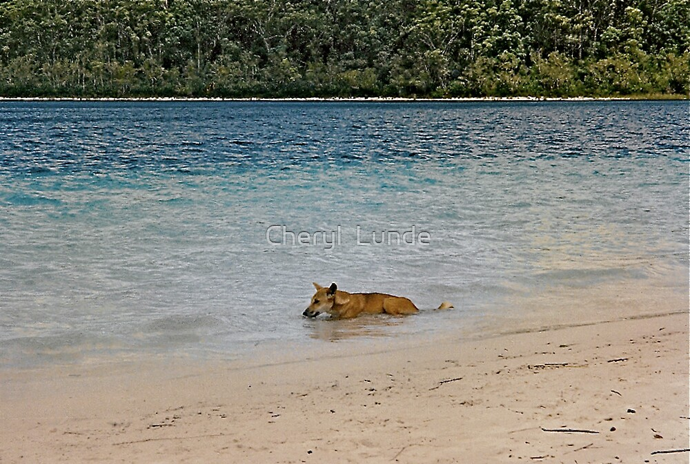Cooling Off by Cheryl  Lunde