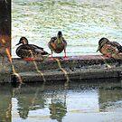 Ducks In A Row by Barry W  King