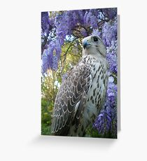 FALCO7 Greeting Card
