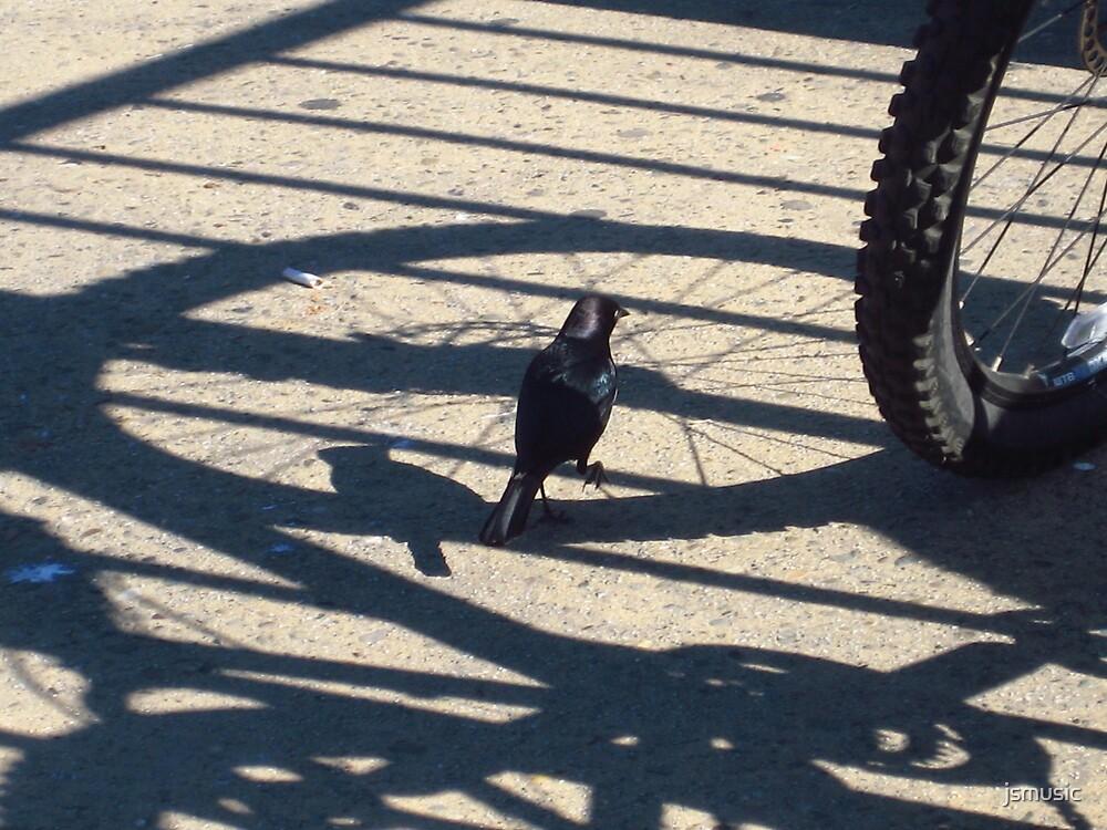 Blackbird  by jsmusic