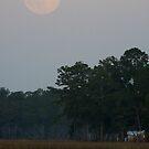 Moon Rising by Jonicool