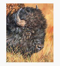 North American Bison Photographic Print