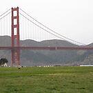 Golden Gate Grass by Robert Brown