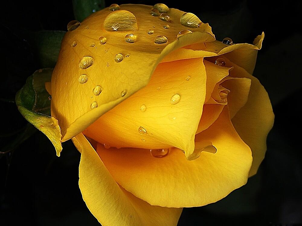 Yellow drops by CarlaSophia