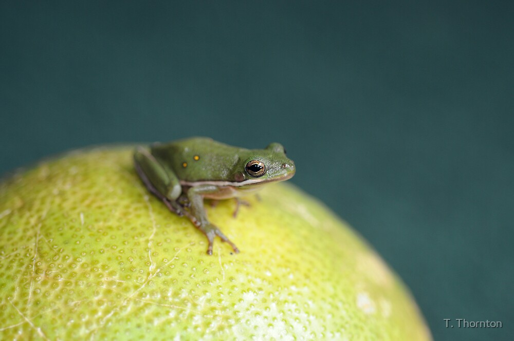 Tree Frog by T. Thornton